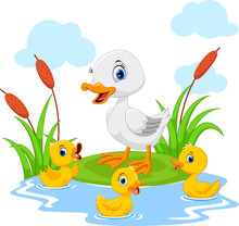 Mother Duck Swims With Her Thr...