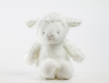 Cute Teddy Lamb