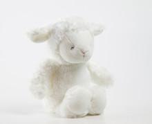 Cute Teddy Lamb