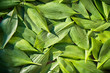 canvas print picture Fresh garden leaves lily valley organic gardening background
