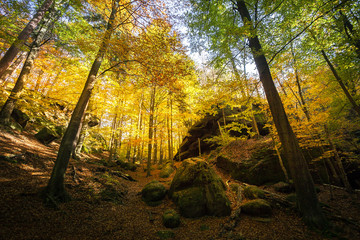 Wonderful nature in autumn in the german Saxon Switzerland National Park. Mountain range with light and fog. Hiking and climbing in wonderful mountain ranges of the Elbe Sandstone Mountains.