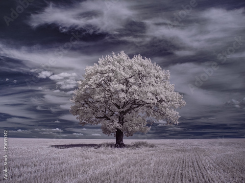 Spoed Foto op Canvas Lavendel infrared photography - ir photo of landscape with tree under sky with clouds - the art of our world and plants in the infrared camera spectrum