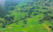 Terraced rice fields in harvest season, Muong Hoa Valley, Sappa, Northern Vietnam