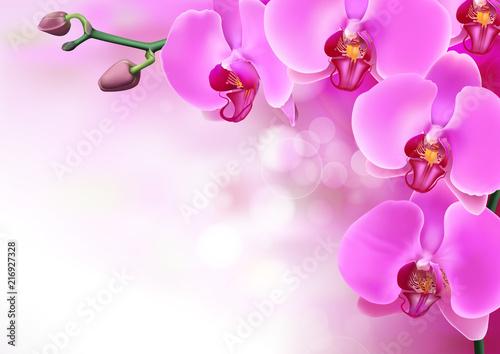 Obraz na plátně Pink purple orchids flowers closeup on purple gradient with bokeh background