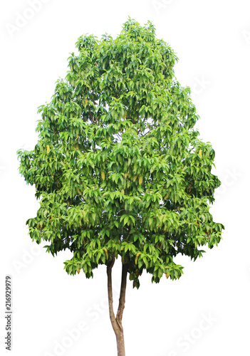 drzewo-odizolowywajaca-zielen-na-bialym-tle