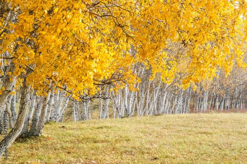 Woods © jiande