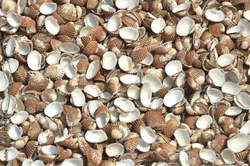 Valokuva  clamshell background