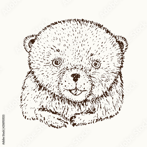 Photo sur Toile Croquis dessinés à la main des animaux Teddy bear face close up, hand drawn doodle sketch, isolated vector outline illustrationŒ