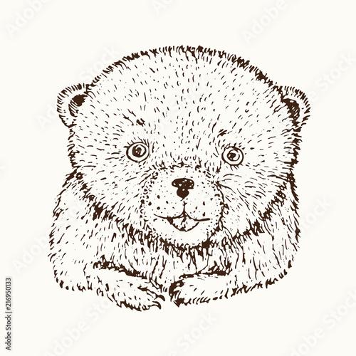 Poster Croquis dessinés à la main des animaux Teddy bear face close up, hand drawn doodle sketch, isolated vector outline illustrationŒ