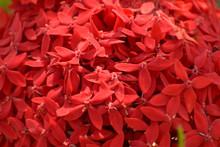 Cudowne Czerwone Kwiatki