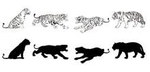 Wild Animals Silhouette, Tiger