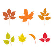 autumn leaves set, isolated on white background. vector ilustration