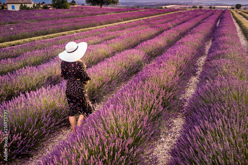Lavender field summer