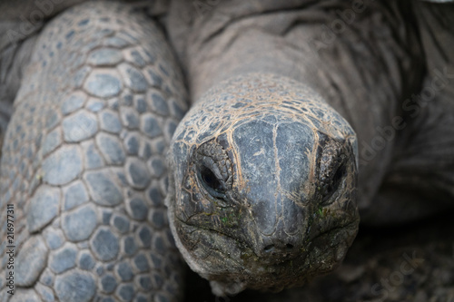 Foto op Aluminium Schildpad giant turtle in zoo