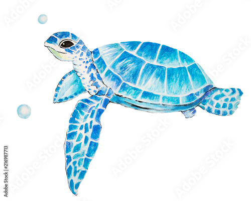 Big sea turtle watercolor painting, Sea life. watercolor sea turtle isolated on white background