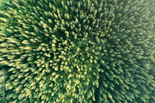 Fototapeten Wald Green forest aerial view