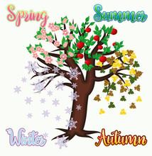 Four Seasons Tree Banner, Vect...