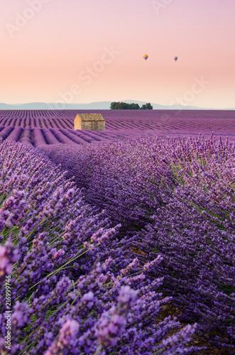 Tuinposter Lavendel Plateau de Valensole 2018