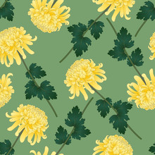 Yellow Chrysanthemum Flower On Green Olive Background