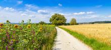 Weg Durch Die Felder