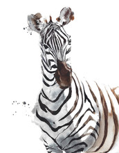 Zebra Wildlife Animal African ...