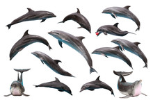 Set Of Bottlenose Dolphin On W...