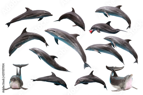 Photo sur Aluminium Dauphin Set of Bottlenose Dolphin on white isolated background