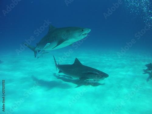 Staande foto Dolfijnen DCIM\107MICRO