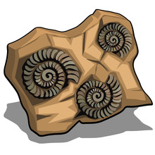 Set Of Fossilized Shell Of Ammonite Isolated On A White Background. Vector Cartoon Close-up Illustration.