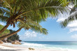 Palm trees on a tropical beach in Seychelles