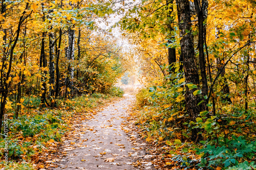 Foto op Canvas Herfst Path in a forest with colorful autumn leaves