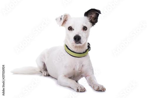 Foto Mischlinghund auf weißem Hintergrund