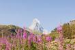 Zermatt, Furi, Zmutt, Matterhorn, Alpen, Wallis, Wanderweg, Zmuttbach, Walliser Berge, Bergdorf, Bergblumen, Sommer, Sommersport, Schweiz