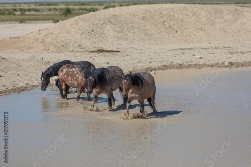 Wild Horses at a Desert Waterhole in Utah Poster