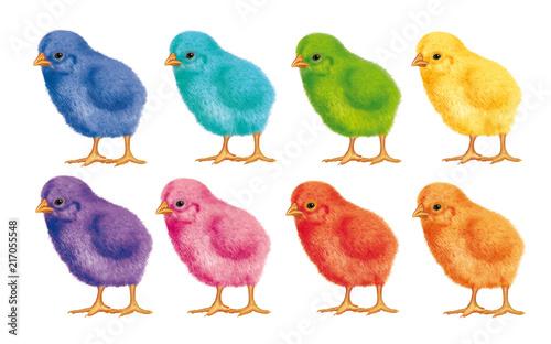 Fototapeta  poussin- joli- coloré- couleur-duveteux- illustration- oiseau