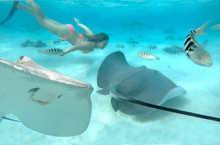 UNDERWATER: Girl Dives Behind ...