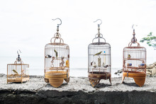 Four Bird Cages With Singing Birds On A Stone Wall In Sanur, Bali, Indonesia