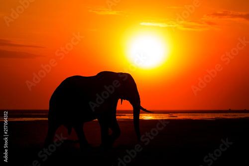 Papiers peints Corail African Elephant