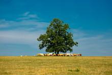 Bright Summer Sunny Day, Rural...