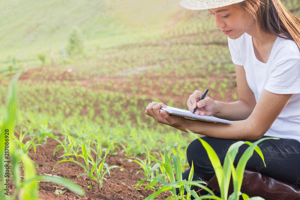 Fototapety, obrazy: Female researchers are examining and taking notes in the corn seed field.
