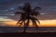 Sunrise On The Beach With Palm Tree Front And Center