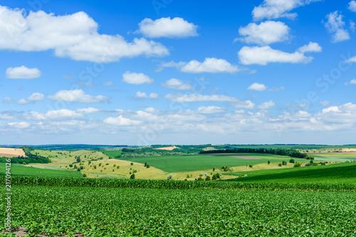 Deurstickers Groene Beautiful landscape with green fields under blue sky