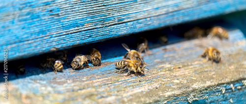 Aluminium Prints Bee Life of Worker Bees. The Bees Bring Honey
