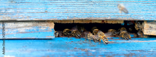Photo Life of Worker Bees. The Bees Bring Honey