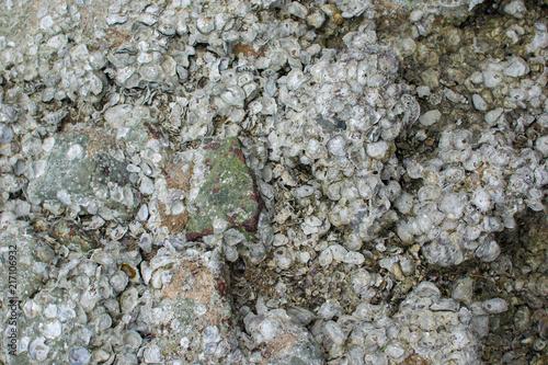In de dag Stenen Stone on the coast, texture of the sea stone, shell rock.