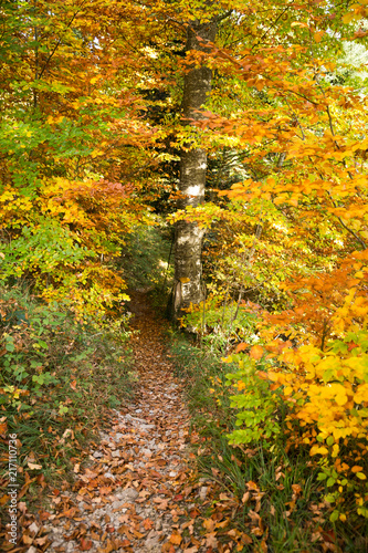 Staande foto Meloen Yellow Path Sign Hand Painted on a Tree in Golden Foliage Forest .