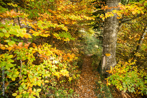 Tuinposter Oranje Yellow Path Sign Hand Painted on a Tree in Golden Foliage Forest .