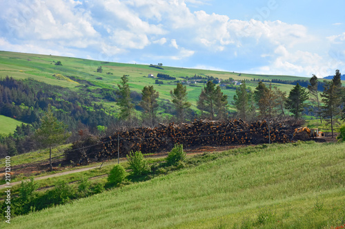 Foto op Canvas Pistache Italy, Puglia region, typical hilly landscape in spring