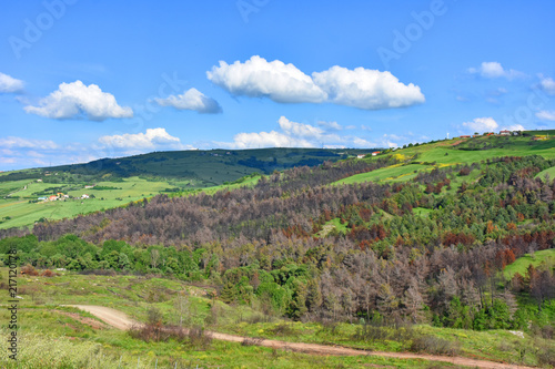 In de dag Pistache Italy, Puglia region, typical hilly landscape in spring