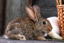 White And Brown Rabbits In A G...